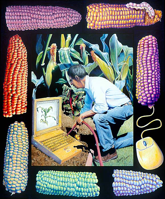 rhiner_als-corn.jpg