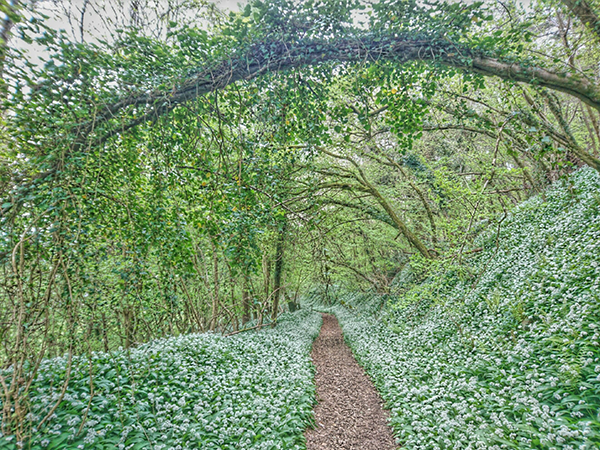 The Fairy Archway