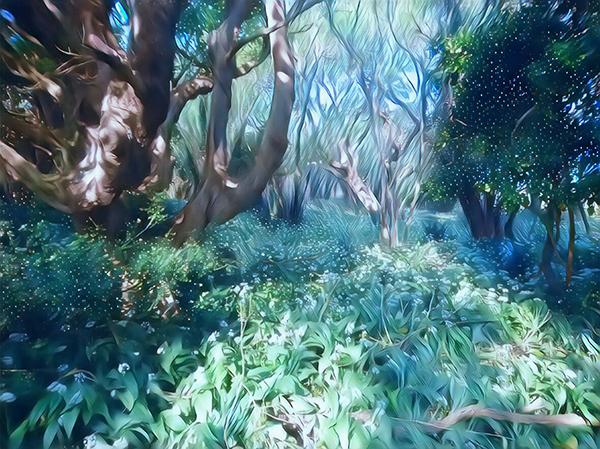 The Fairy Woods