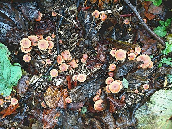 Woodland Mushrooms.png