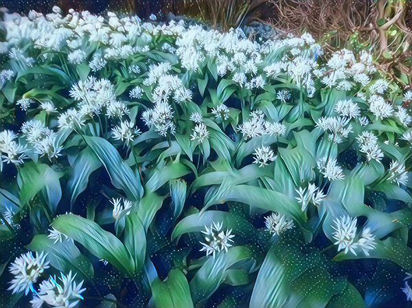 Wild Garlic.png