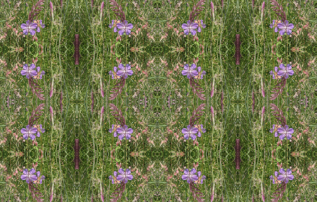 wildflower fabric.jpg