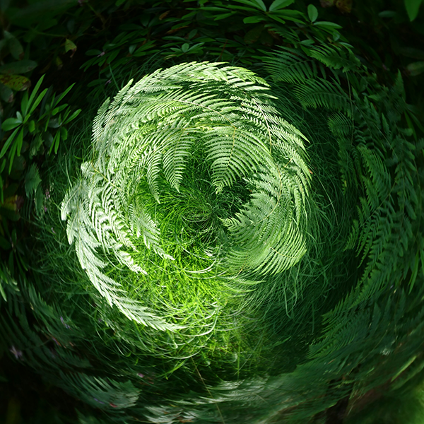 Fern Wormhole.png