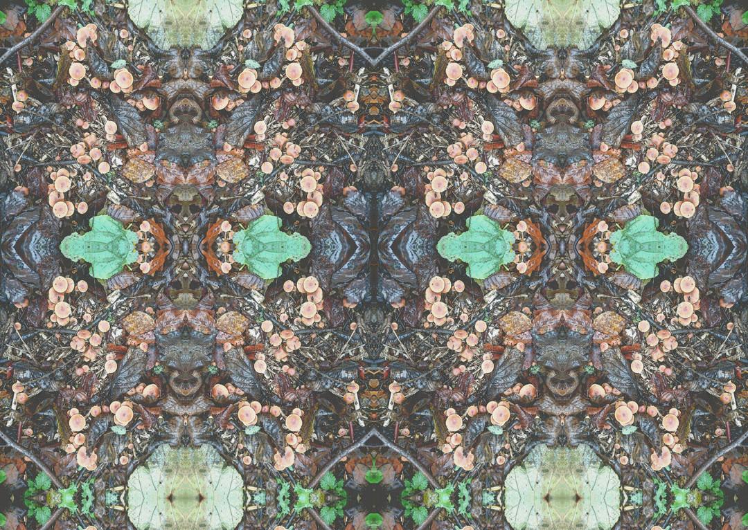 woodland mushrooms.jpg