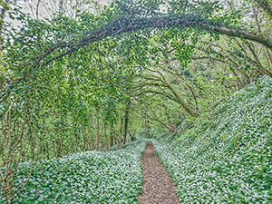 The Fairy Archway.png