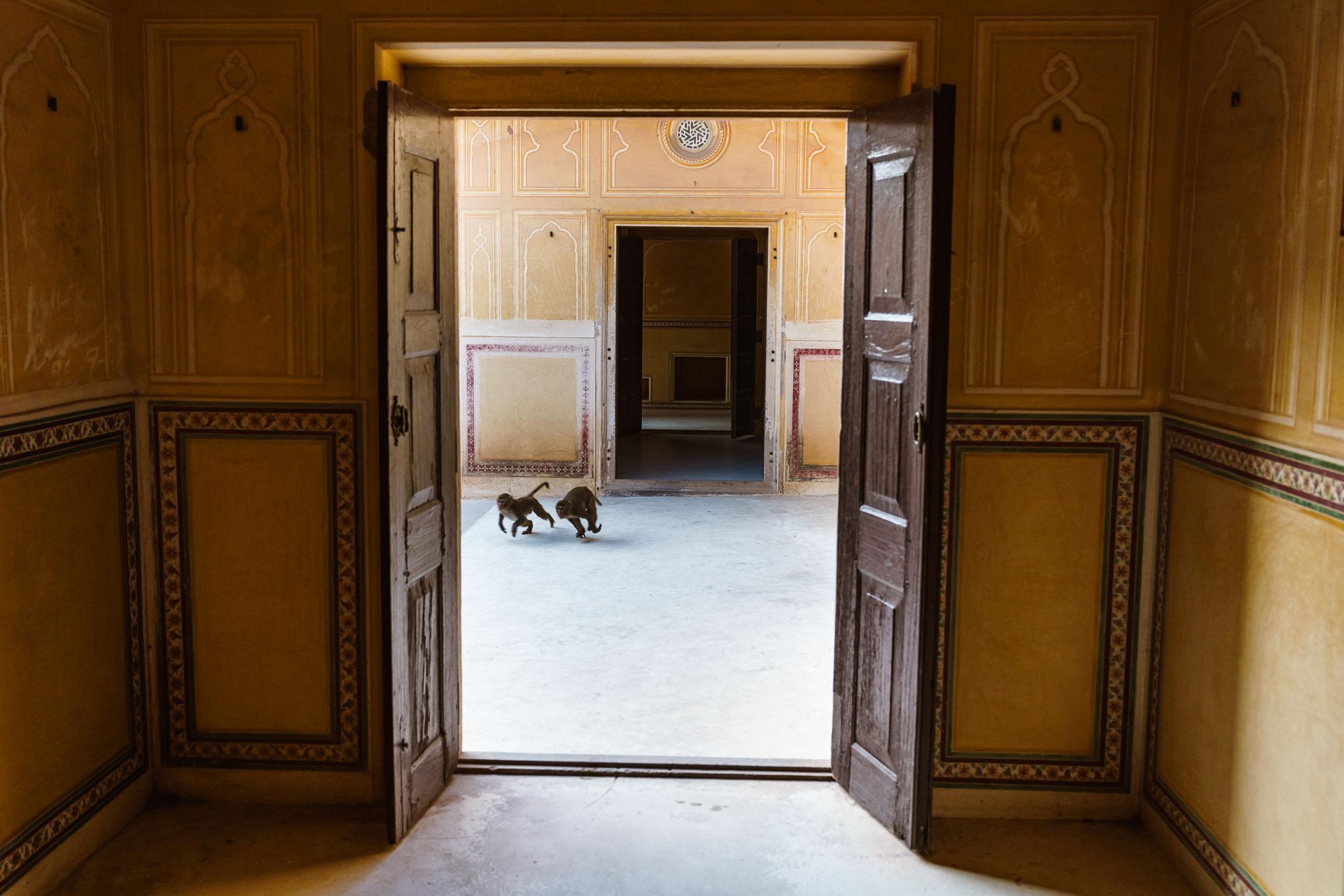 India-jaipur-monkey-2.jpg