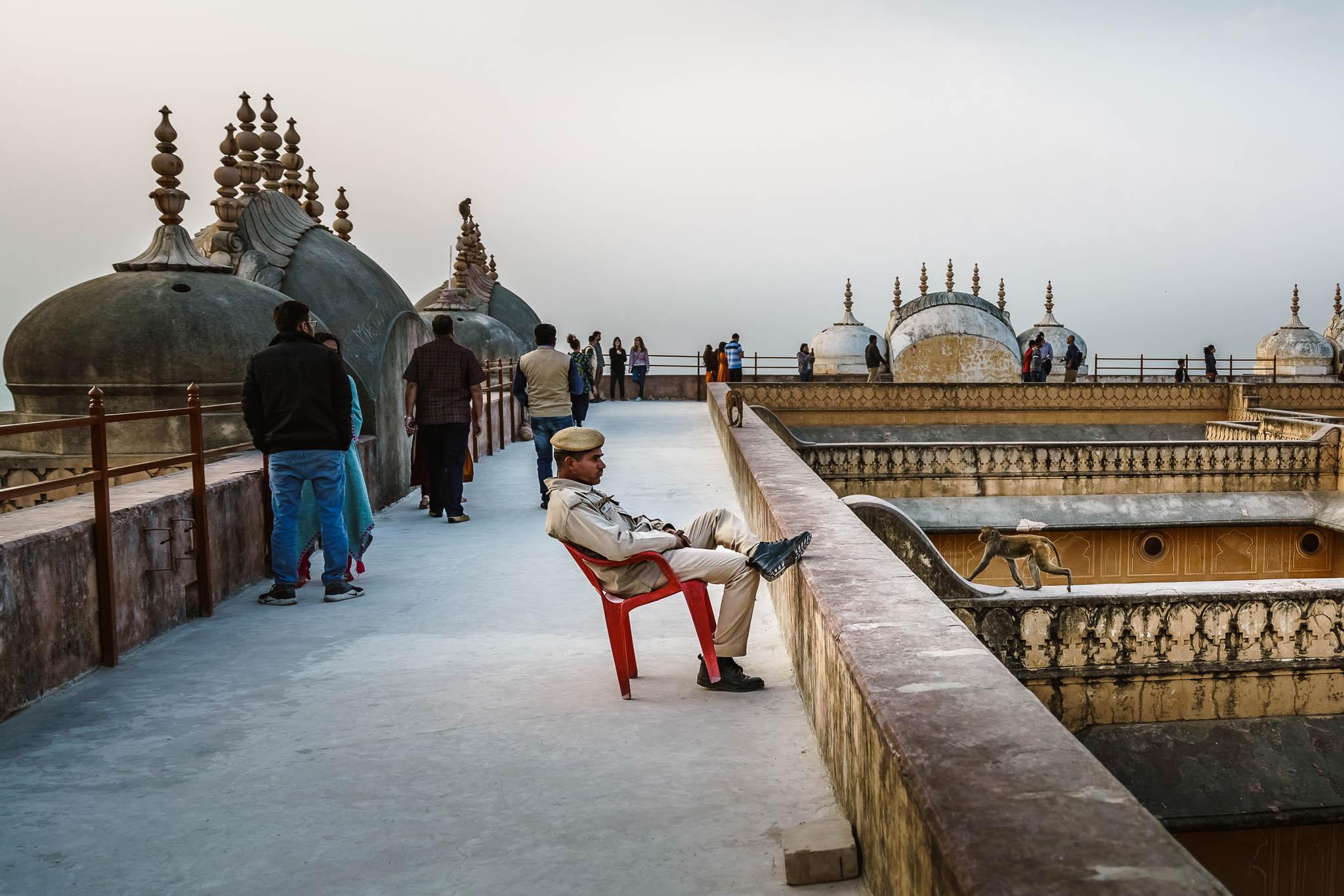 India-jaipur-monkey-7.jpg