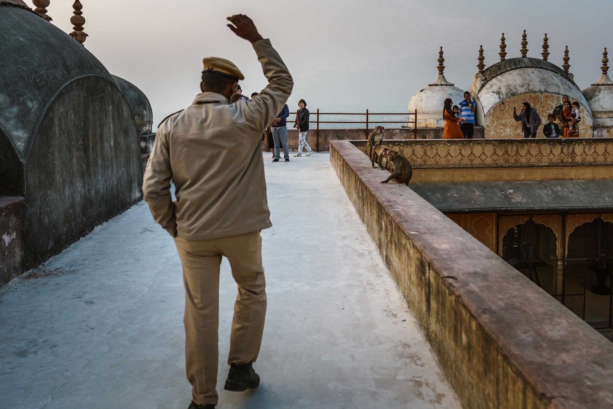 India-jaipur-monkey-8.jpg
