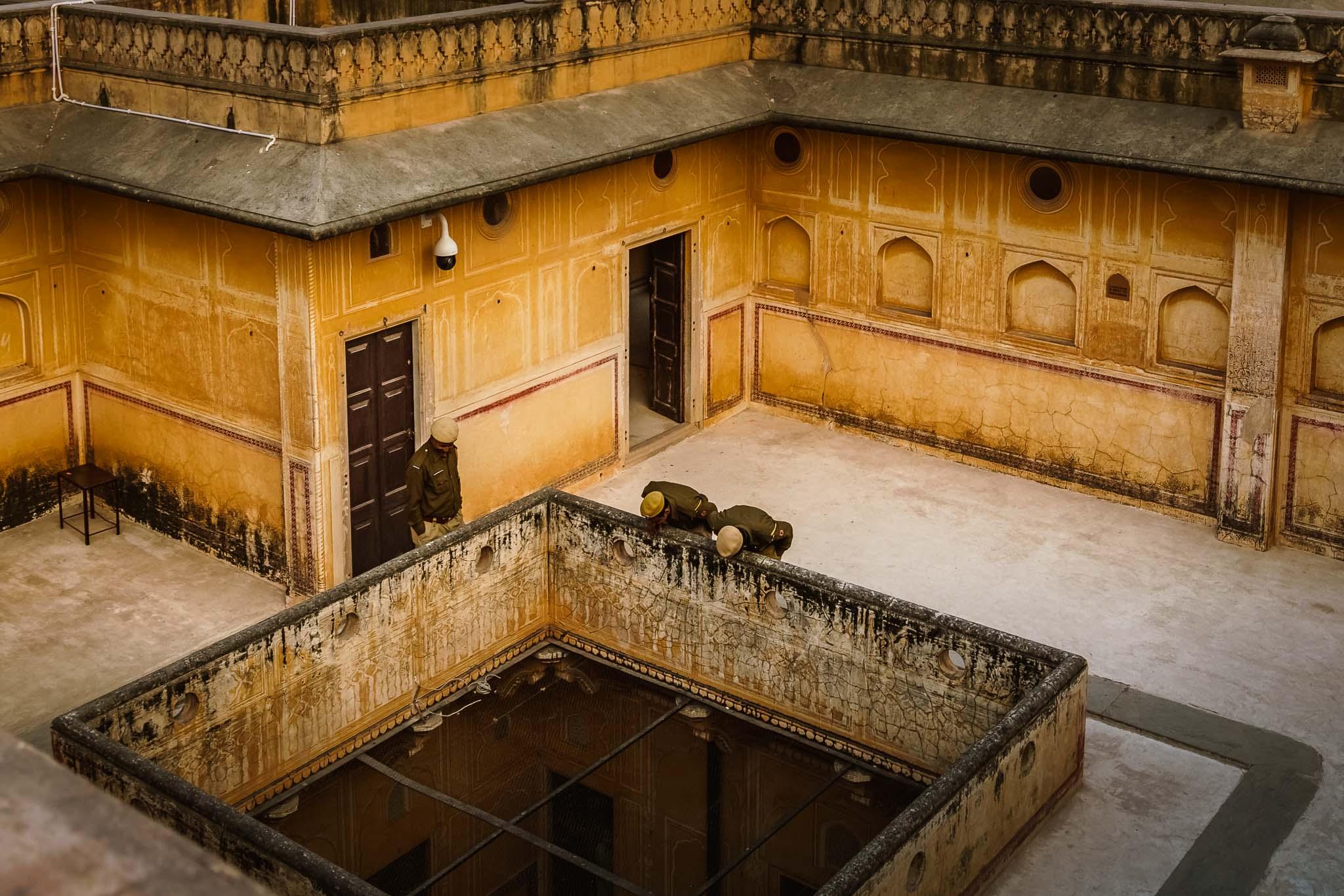 India-jaipur-monkey-9.jpg