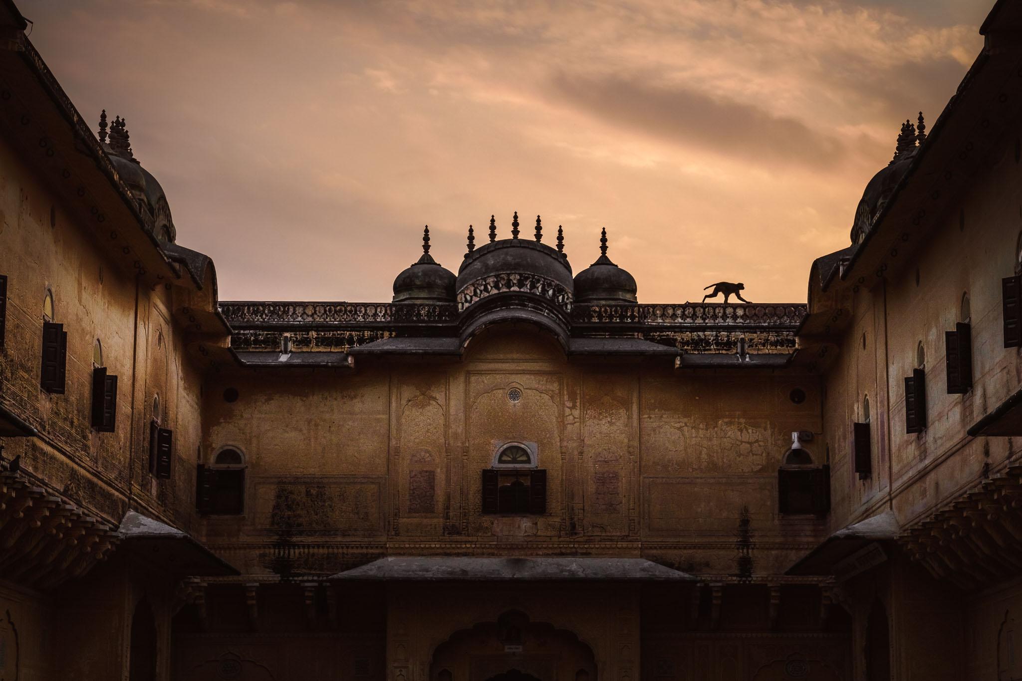 India-jaipur-monkey-10.jpg