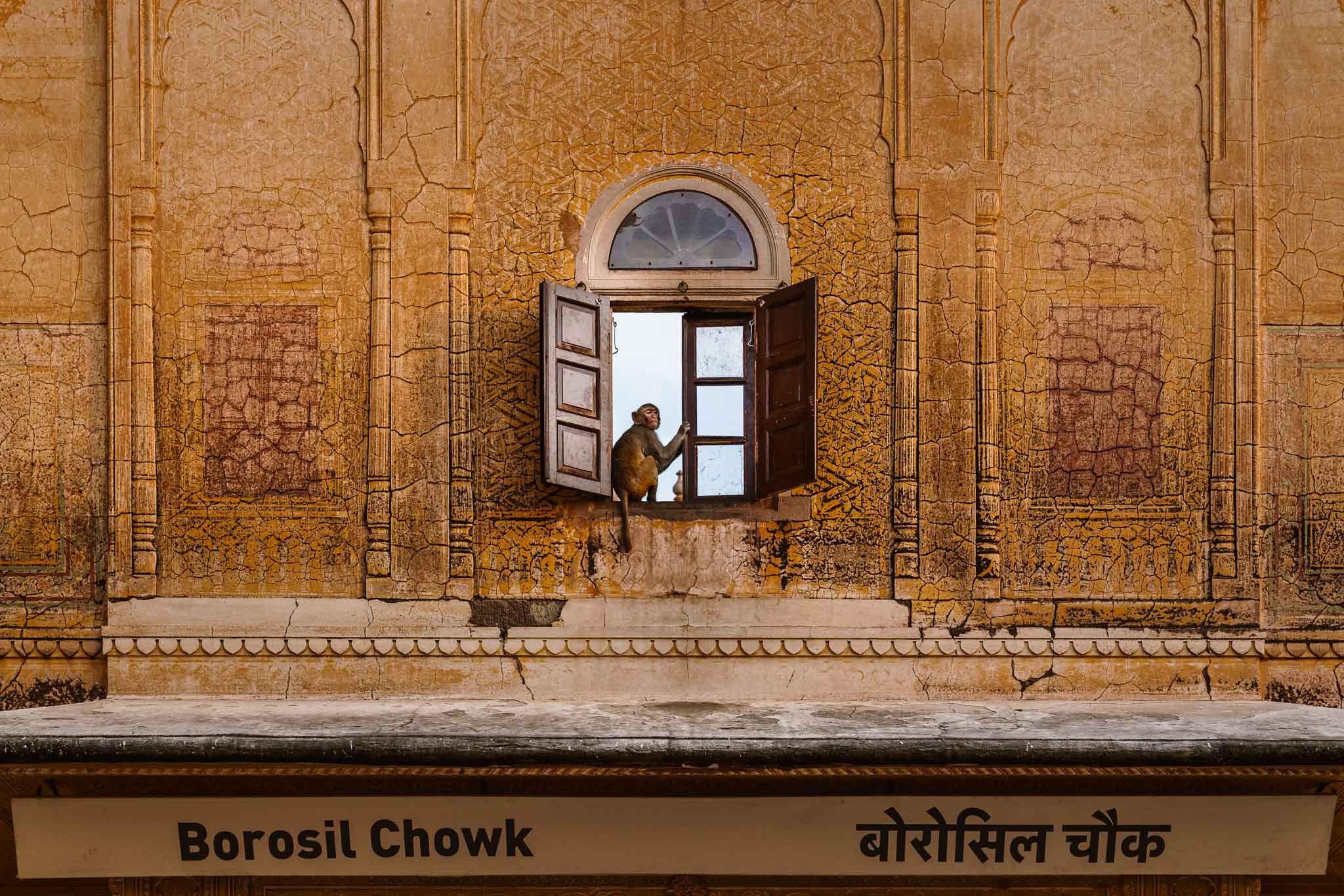 India-jaipur-monkey.jpg