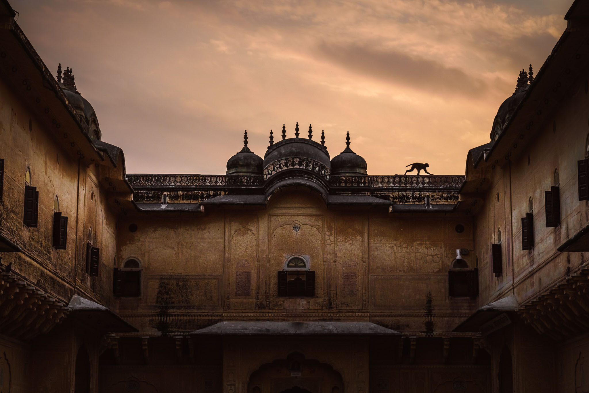 the monkeys of nahargah fort - Jaipur, IndiaHigh above the Pink city sits Jaipur's nahargarh fort, the 'Abode of tigers'. But its roofs and walls are a playground for something a bit smaller than its namesake.
