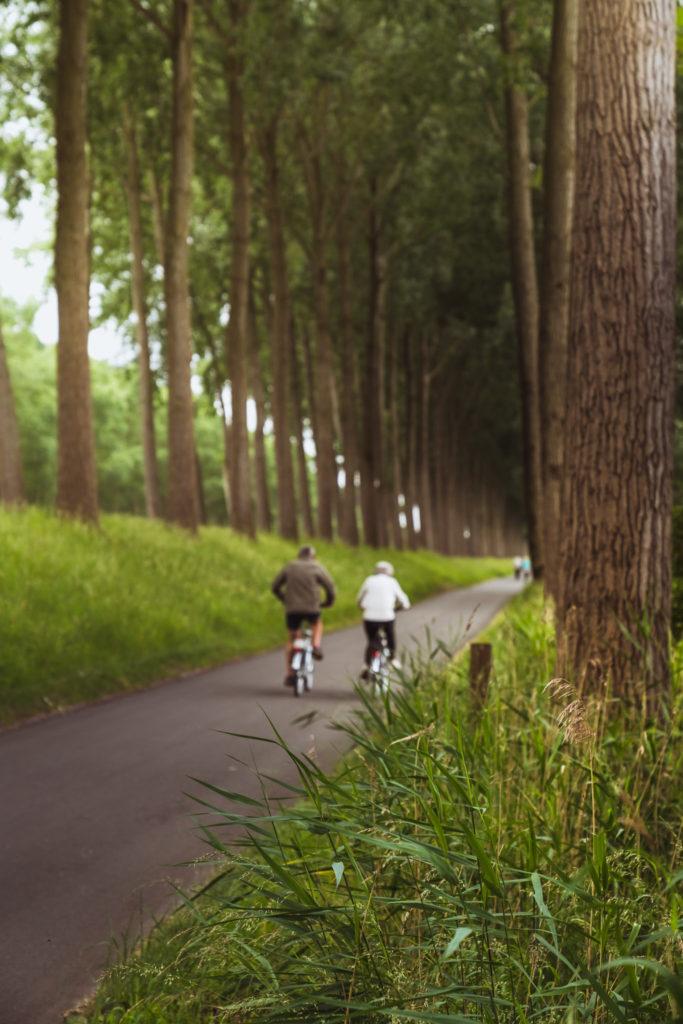 Netherlands-woodland-cycleway-683x1024.jpg