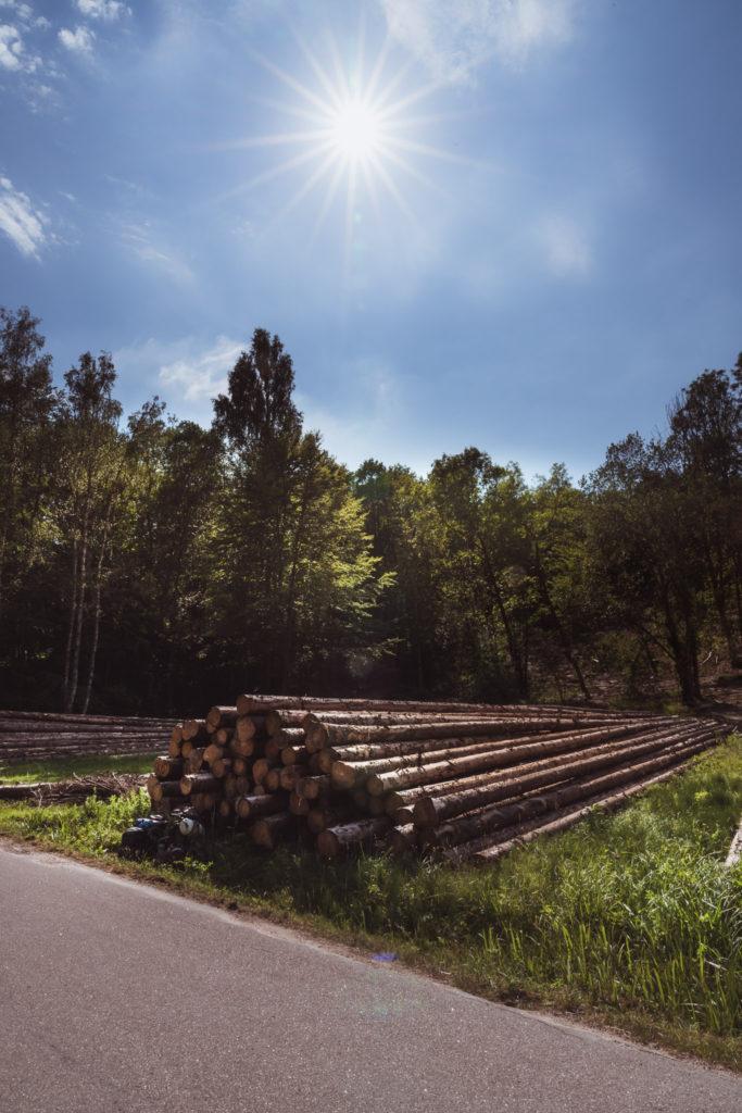 Sweden-woodland-rest-stop-683x1024.jpg
