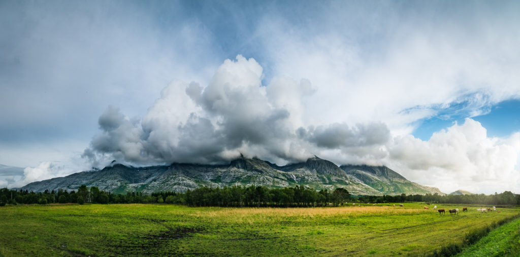 a panoramic view of a low mountain range covered in cloud. In the foreground is a green meadow with grazing cows