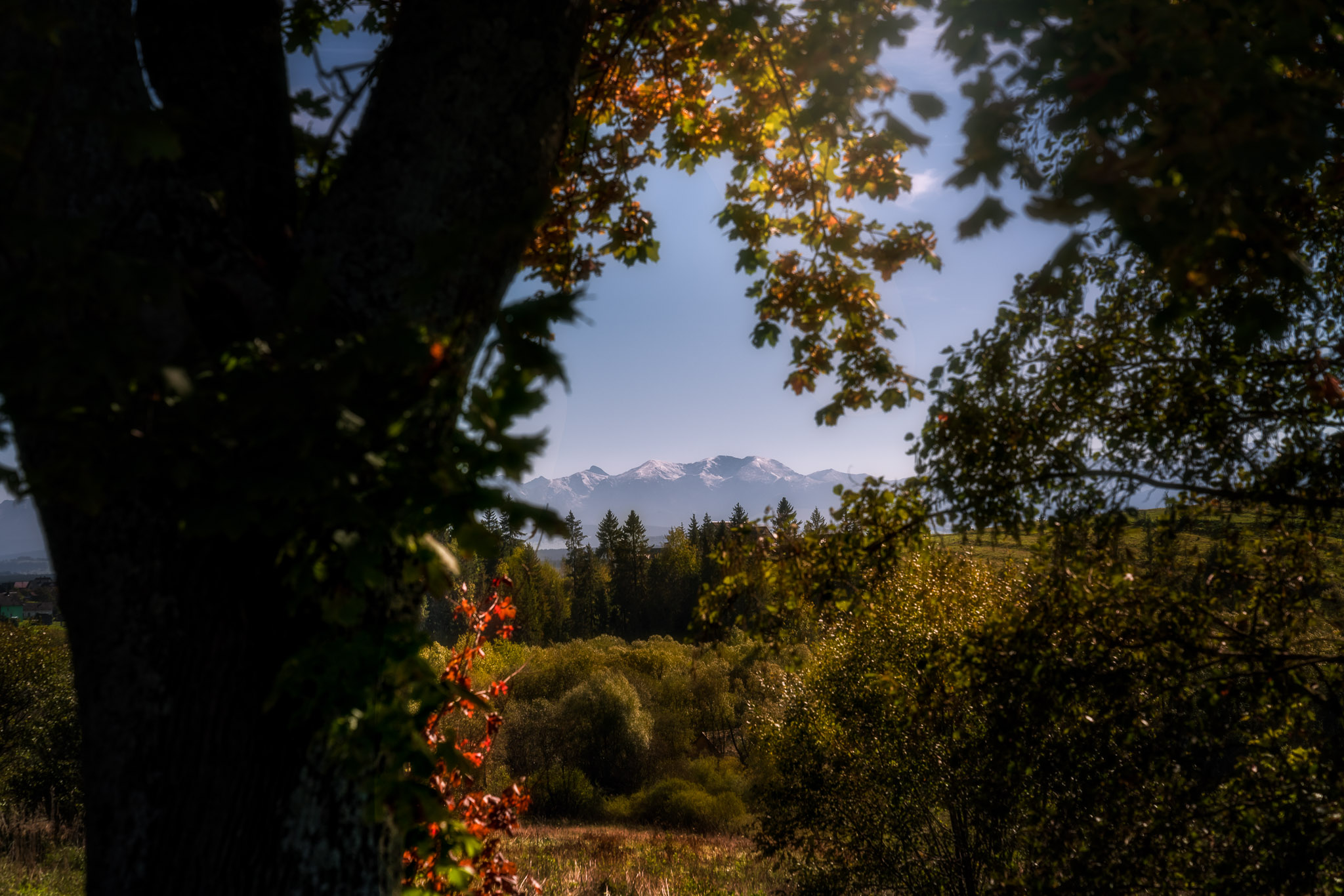 Tatra-mountain-view-framed-in-trees.jpg