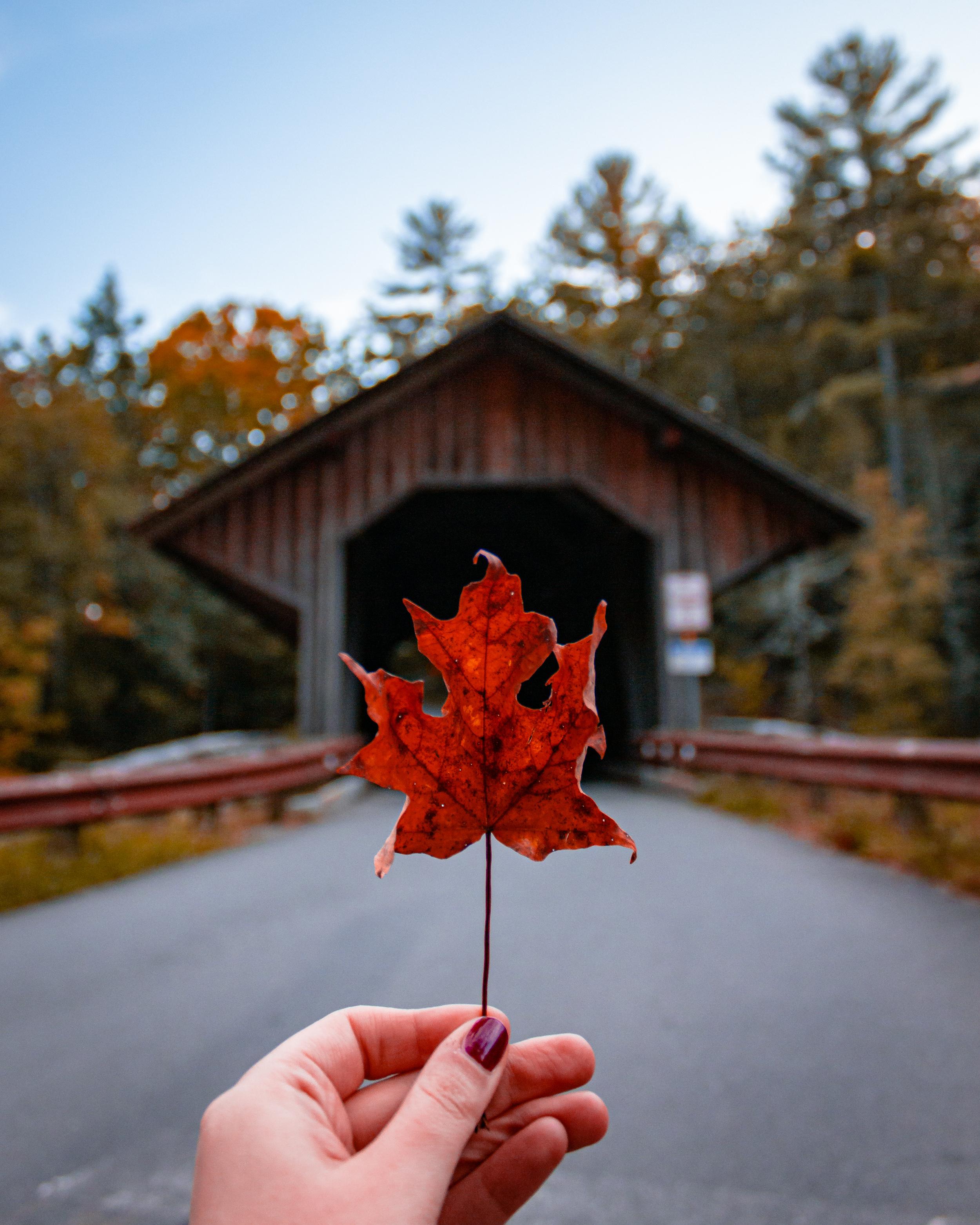 Eunice Williams Bridge Leaf.jpg