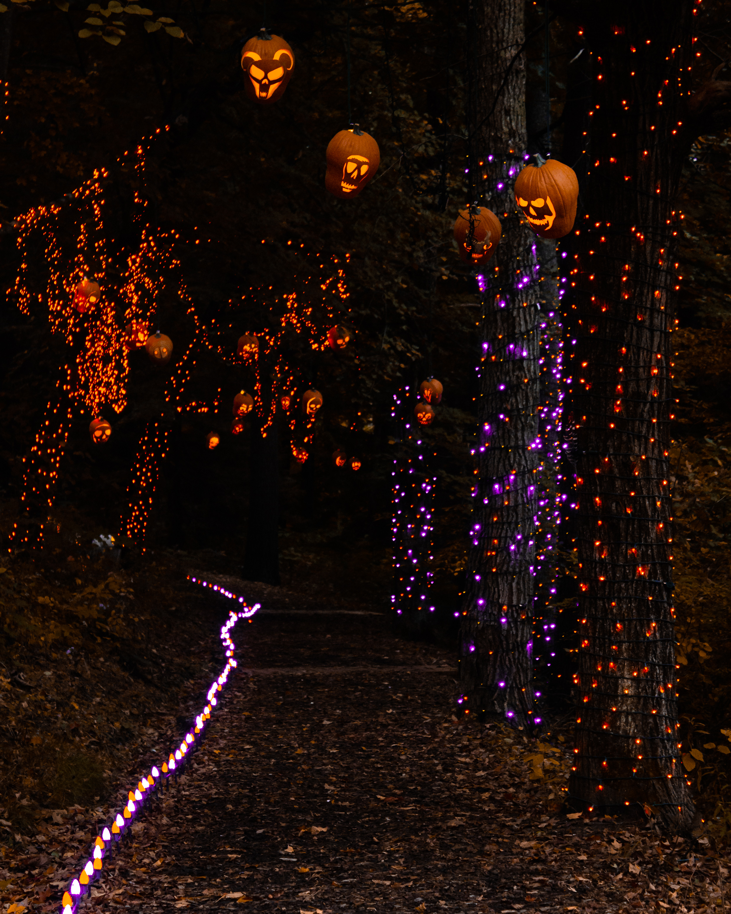Trail of Hanging Jack O Lanterns.jpg