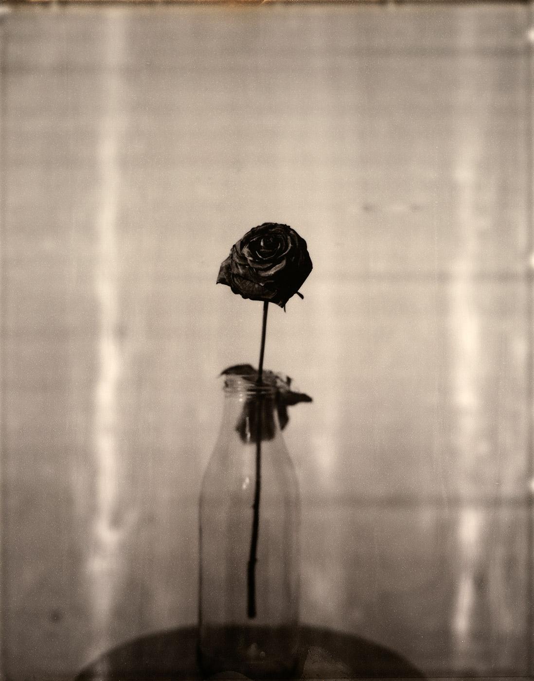 LA_VIE_EN_ROSE | 8x10_BW_LA_VIE_EN_ROSE_01