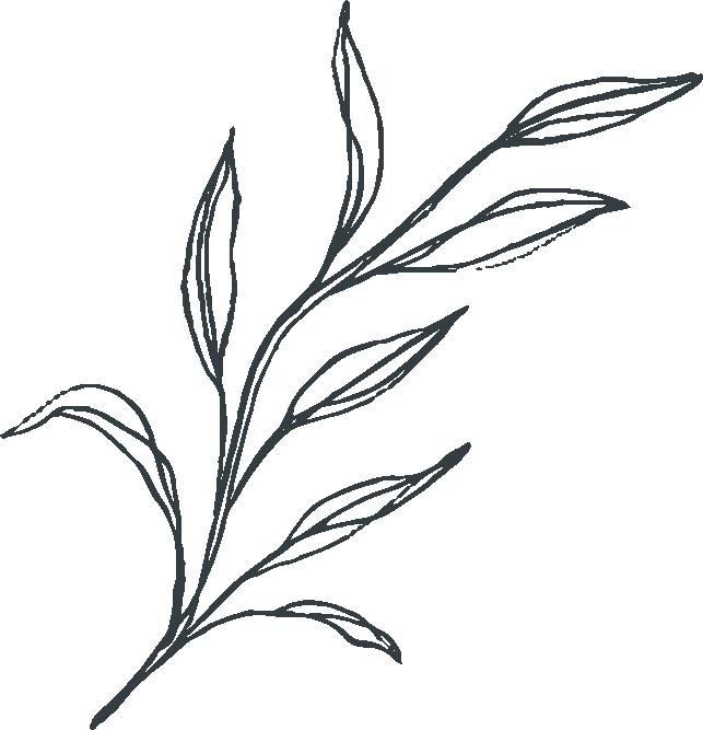 Floral Stems - Botanical Vector Illustrations - Sarah Ann Design - Asset 11.png