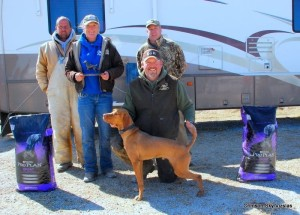 2015 Midwest Vizsla futurity Runner Up Henry