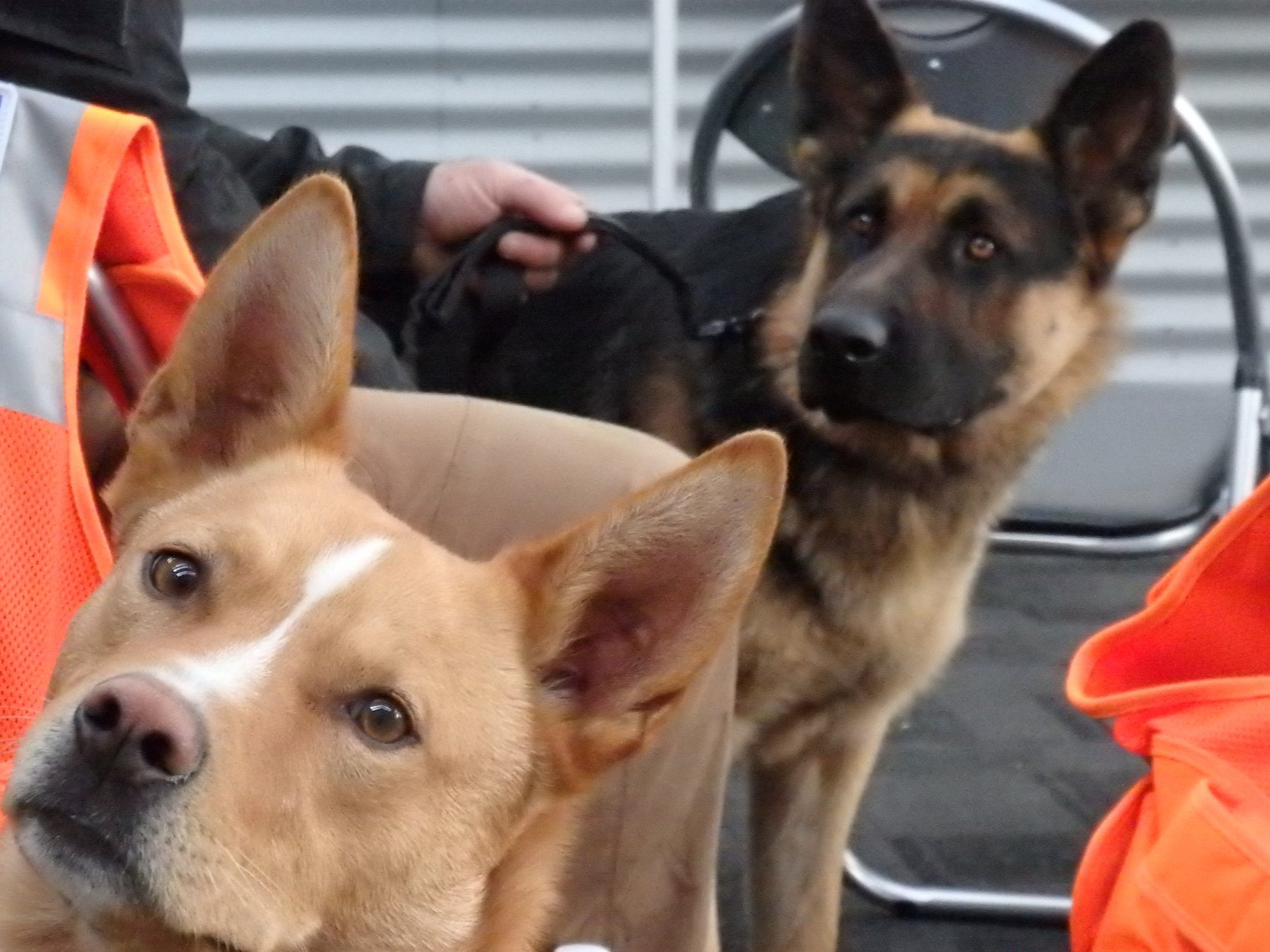 About - Find out about our organisation,mission, our methods, and the reasonswe utilise search dogs.