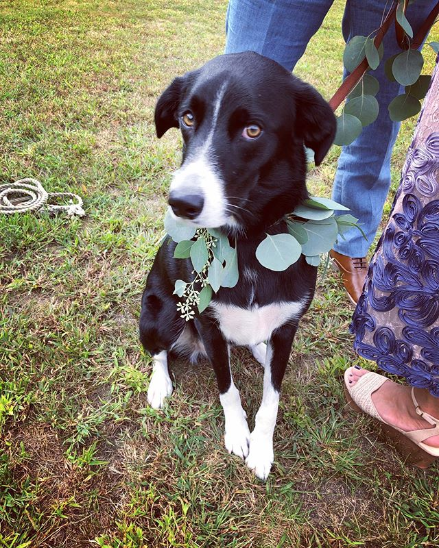 This is Lloyd, a special guest in the wedding party today!