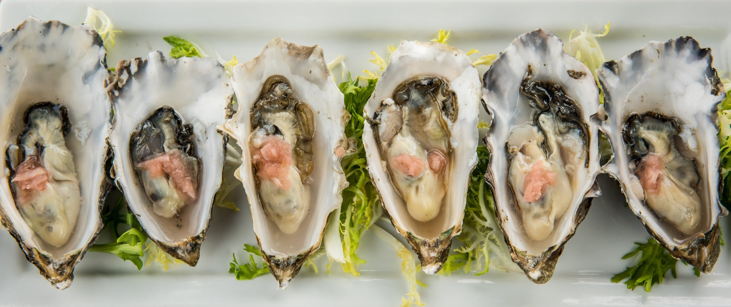Oysters on the half-shell, plated on a bed of frisee lettuce.