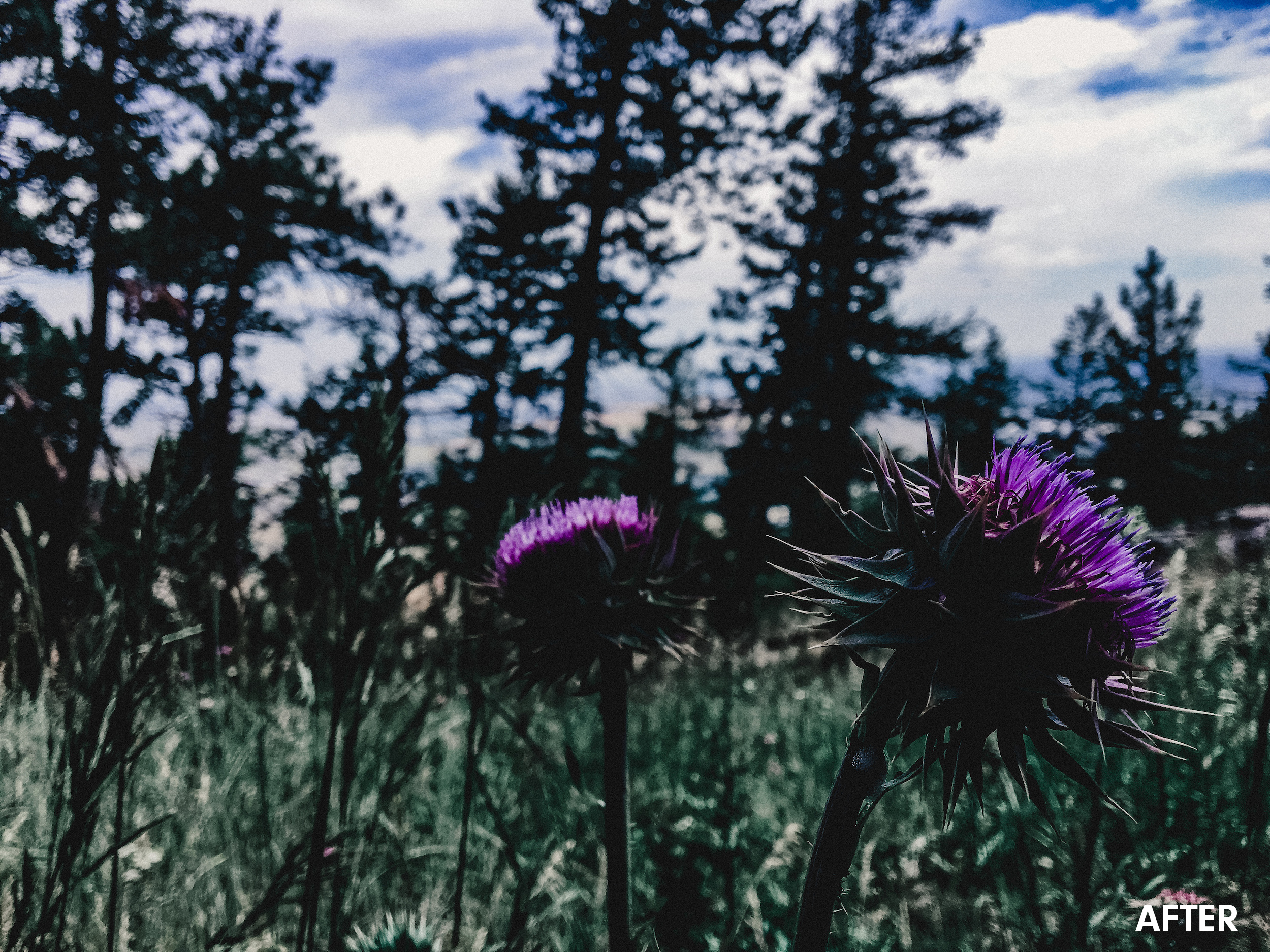 moody-colorado-flowerchickpeach-lightroom-presets6.jpg