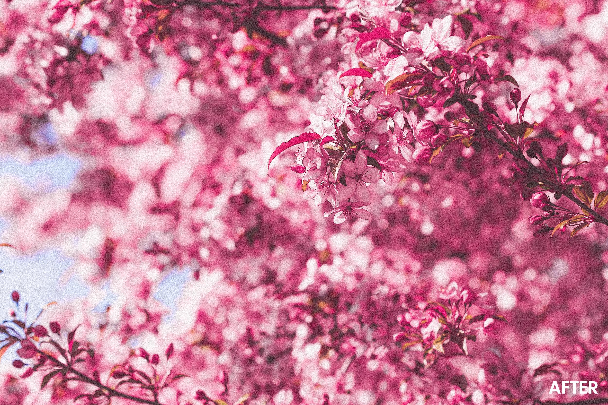 pink-flower-treechickpeach-lightroom-presets8.jpg