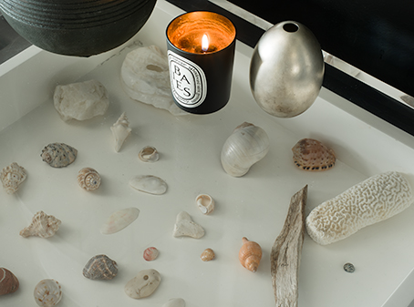Seashell collection in shadow box
