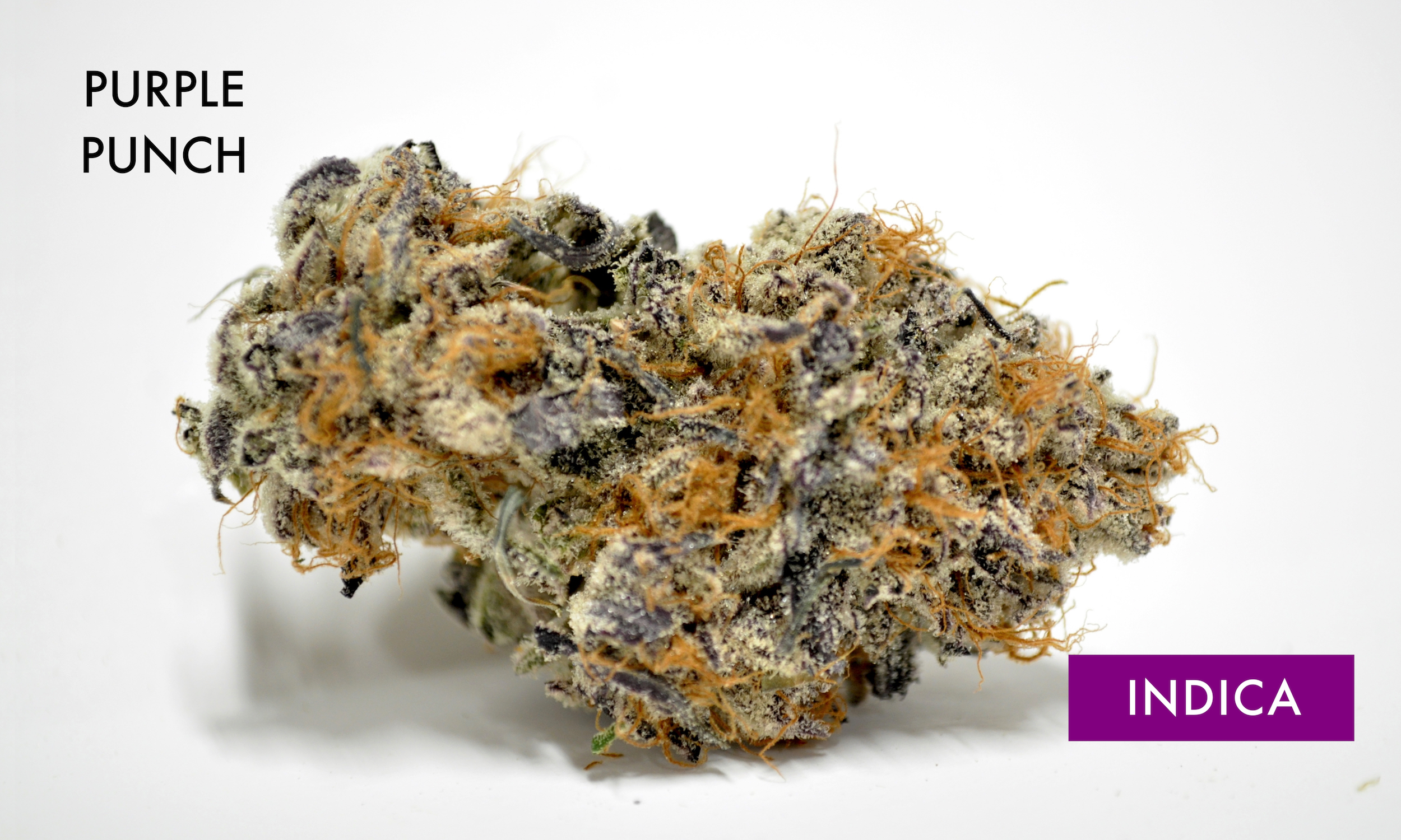 Purple Punch - 100% IndicaPurple Punch is the sweet and sedating union of two indica-dominant classics. By breeding Larry OG with Granddaddy Purple, the astonishing trichome laden Purple Punch was born, smelling of grape candy, blueberry muffins, and tart Kool-Aid. The potency of this strain gives the consumer a one-two punch to the head and body, initially landing between the eyes and settling down into the limbs. Purple Punch is a delicious dessert strain that is best suited for after dinner. Its effects may help with managing nausea, stress, minor body aches, and sleeplessness.