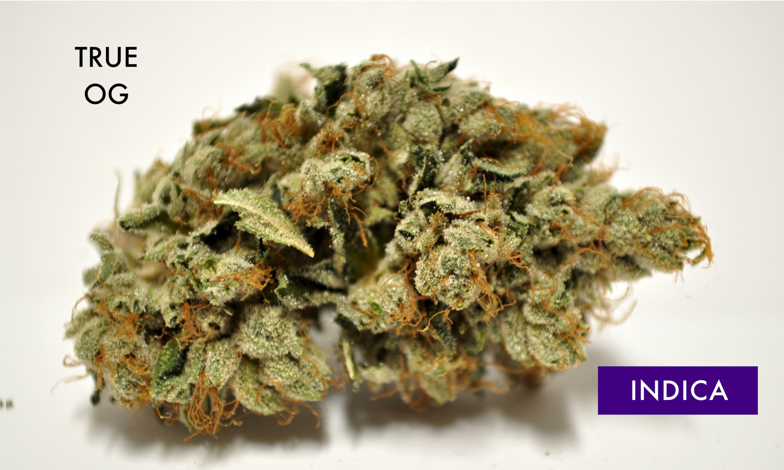 "True OG - 50% Indica / 50% SativaA popular indica strain that was originally discovered in Southern California, where the term ""OG"" originally meant ""ocean grown."" Bred with genetics from the very popular OG Kush, True OG is potent enough for mellow, lasting effects combined with a more focused head high. Flowers have a pungent, crisp citrus and evergreen scent. True OG has snagged the 2nd place indica spot in every High Times Medical Cup since 2010."