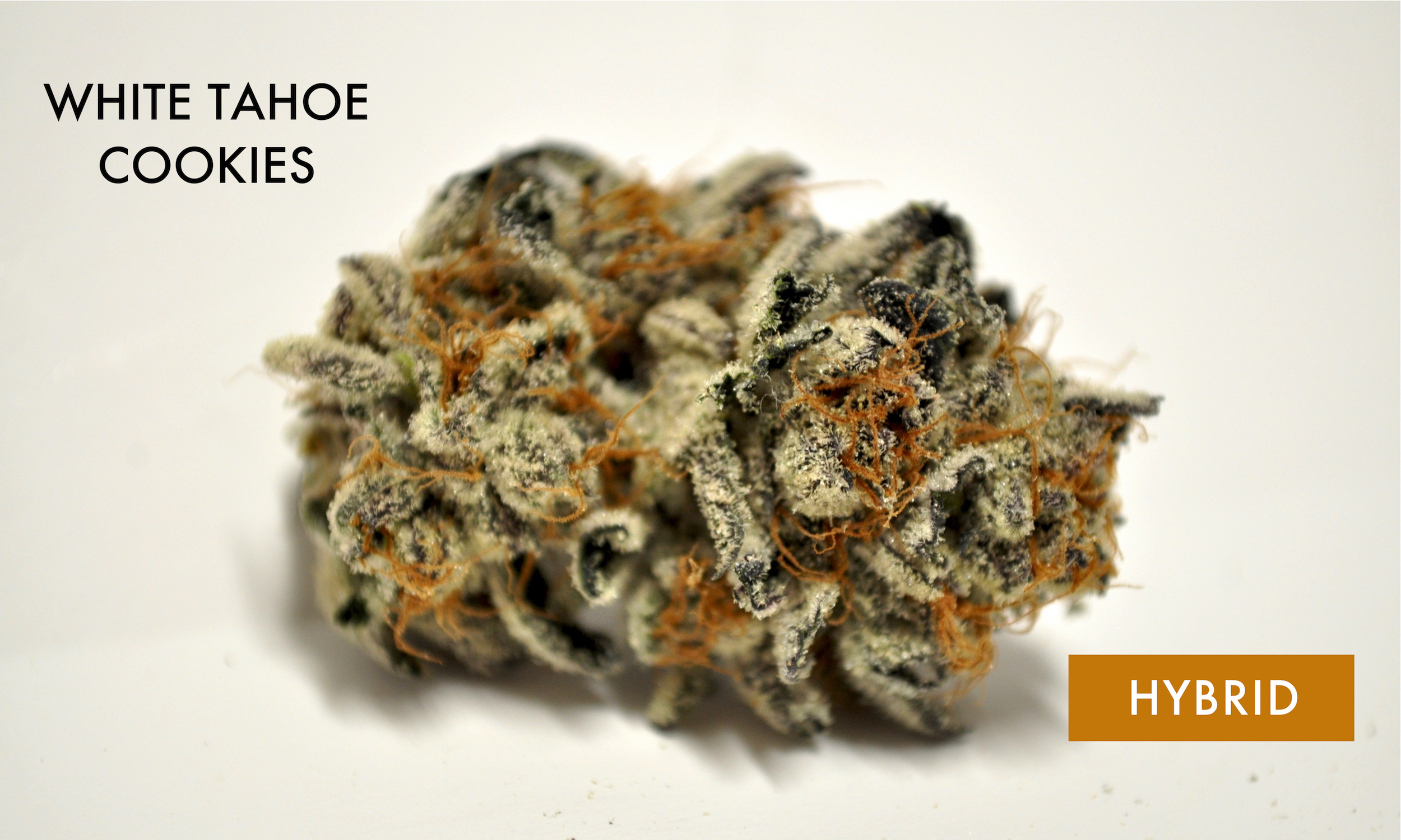 White Tahoe Cookies - 75% Indicais an indica-dominant strain created by Kush4Breakfast and distributed by Archive Seed Bank. This strain is a blend of The White, Tahoe OG, and an unknown Girl Scout Cookies cut, and exemplifies attributes of each in trichome coverage, effect, and aroma. The GSC bouquet has been enhanced through this cross, offering up sweeter, hashier notes with distant OG undertones. Its restful effects pile on with each hit, weighing the consumer to their seat while alleviating minor pain and anxiety.