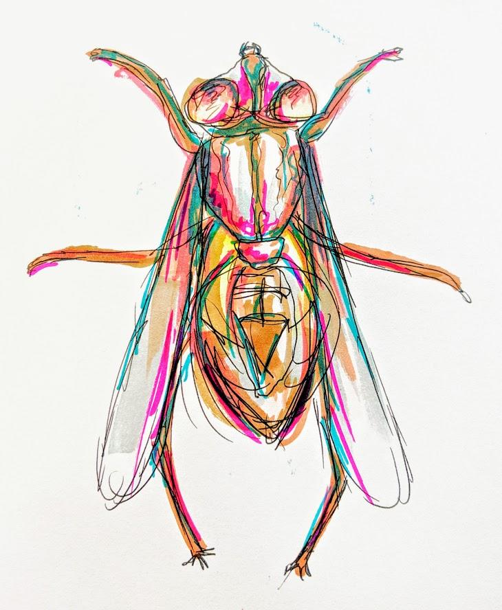 The Fly.jpg