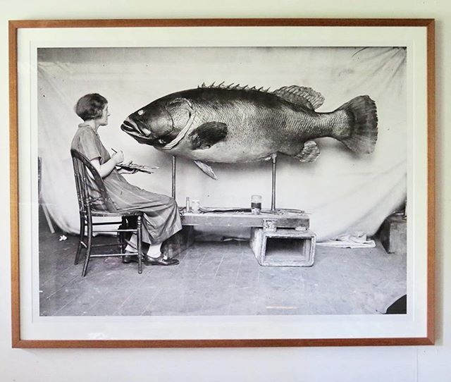 Check out this great photo I framed for the Australian Museum. It's hanging in the cafe upstairs. #australianmuseum