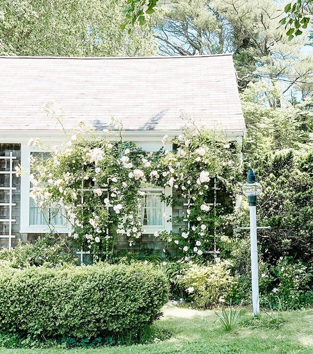 Cape Cod homes have a kind of magic that just can't be replicated 🌷 The overgrown florals, white trim, curtains in the windows; we're here for it all. What's your favorite part of a Cape Cod home? - Hope everyone is heading somewhere warm and coastal today—it's gorgeous outside here on Cape! - #capecodhome #capecodstyle #capecodsummer #capecodliving #exteriorstyle #exteriordesigns #exteriorinspo #newenglandstyle #newenglandhome #newenglandhomes #floralhome #mynewengland #summerhome #summerhomes #lightandbright #brightandairy #simplywhiteandbright #whiteandbright #whitehomes #designwithplants #designwithmco #mackenzieco #summeronthecape #coastallivingmagazine #coastallivingstyle #coastalcottage