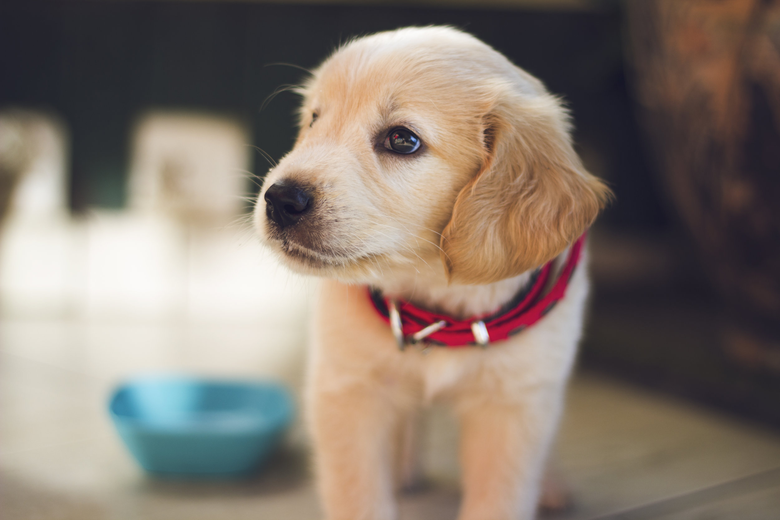 Helpful Resources - We get many questions about where to find reputable resources for puppy and dog owners. Use the list below to find recommended local businesses, organizations, and online information helpful for you and your dog.