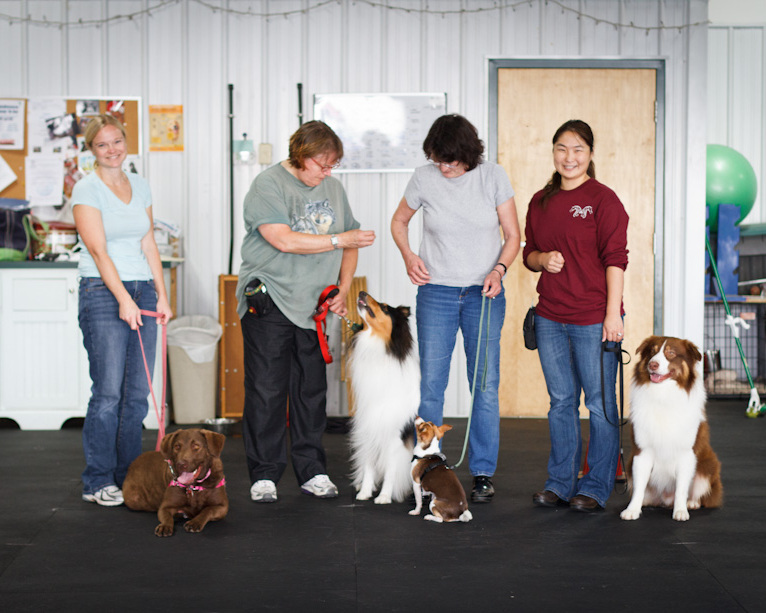 Intermediate Obedience - Continues obedience skill building. Also perfect to prepare your dog for therapy work and Canine Good Citizen (CGC) certification.*Dogs who have successfully completed Basic ObedienceSaturdays @ 11:00 AM - 6 week course for $150