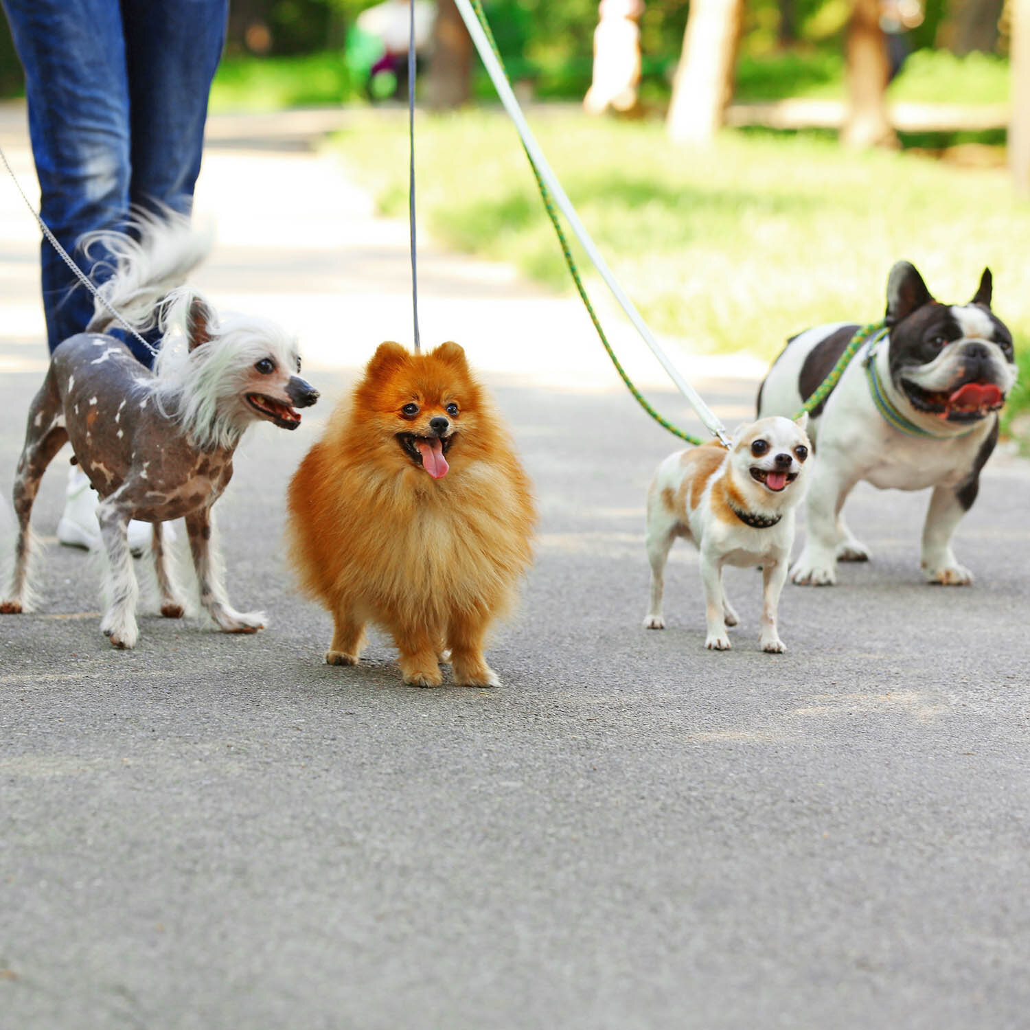 Dog Walking Services in London