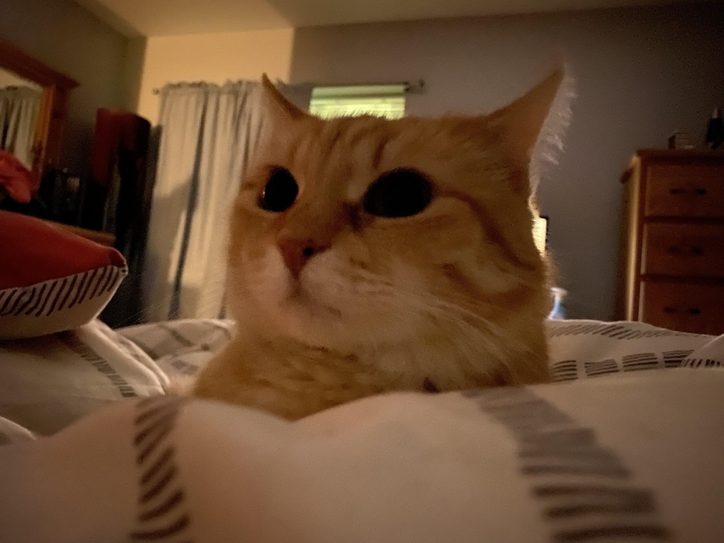- Bedtime snuggles from Aura Bora