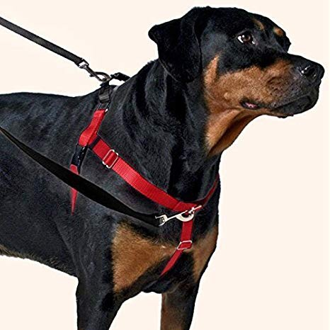 Stock photo of a Freedom Harness. Ask us where to get them and any questions on fitting.