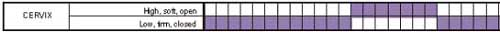 Example of one woman's cervical changes (marked in purple)