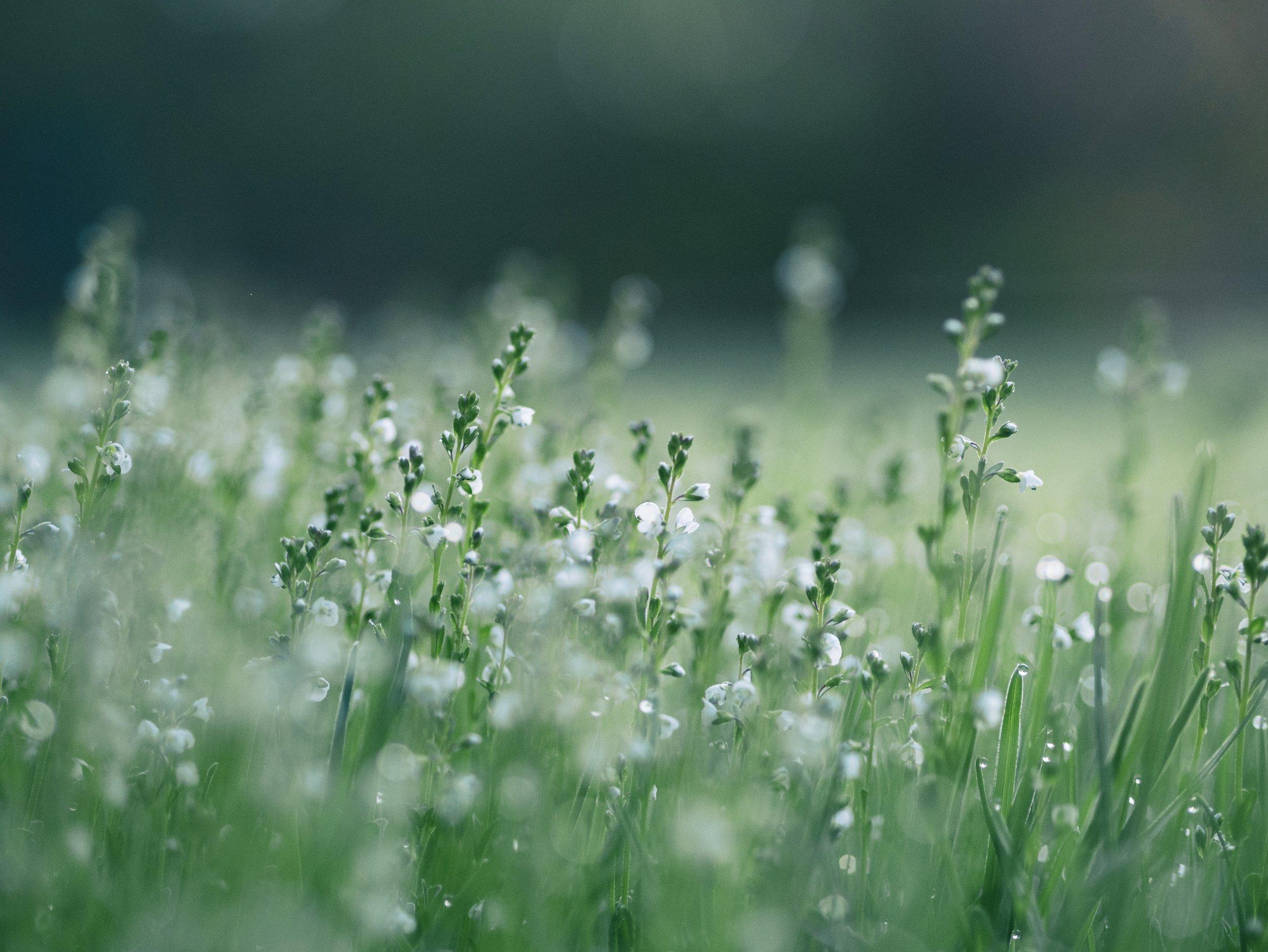 beautiful calming plants in nature