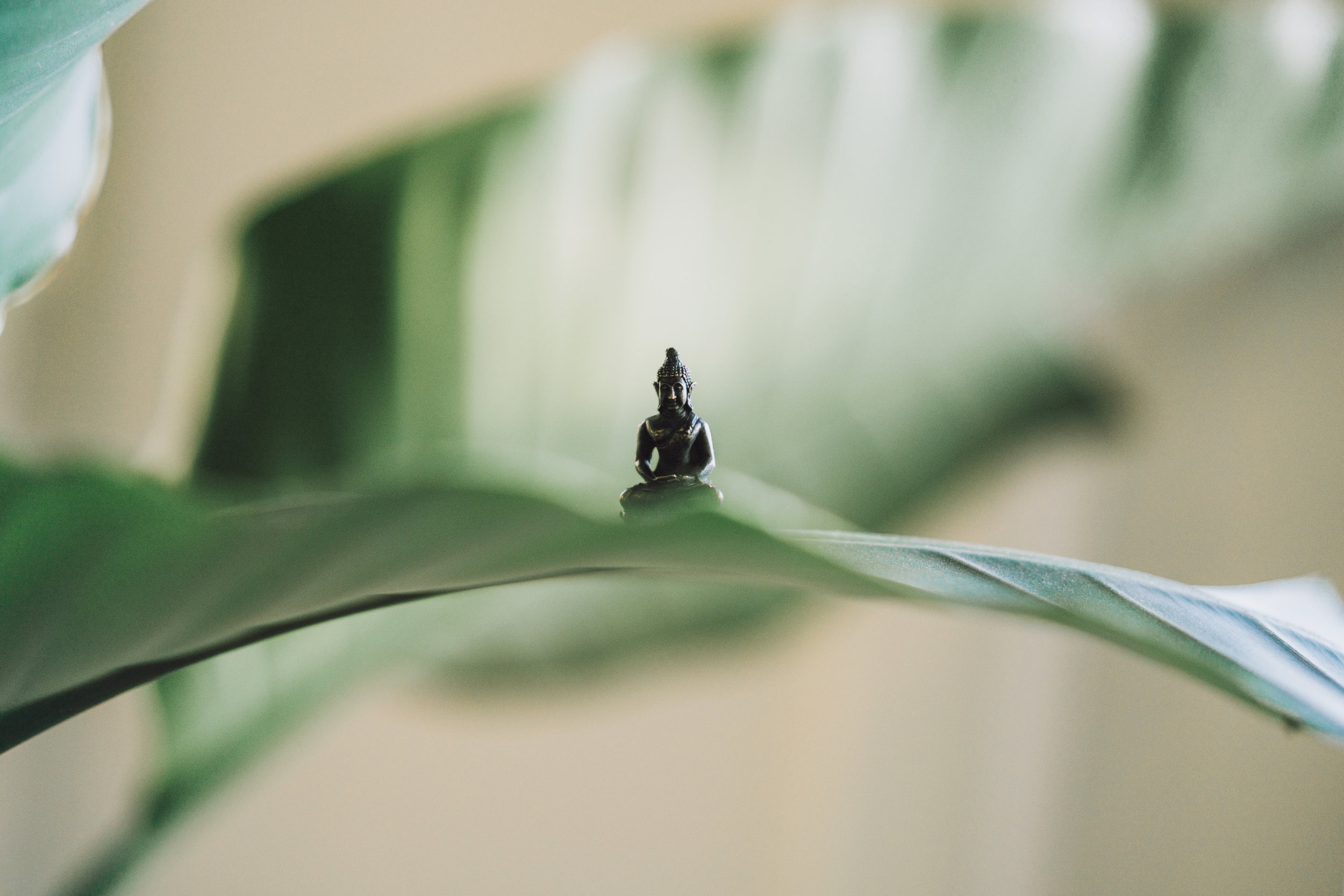 tiny buddha meditating on a leaf