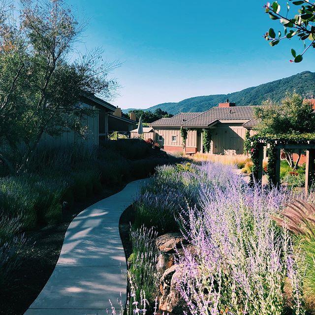 No June gloom in Carmel valley. #bernardus #carmelvalley