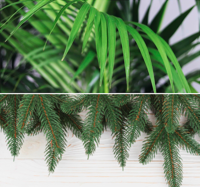 Reforestation - Pour chaque plante verte achetée sur notre boutique en ligne, nous faisons don à une fondation des fonds nécessaires pour planter un arbre dans une forêt, où il sera le plus utile. Nous soutenons the National Forest Foundation et à ce jour nous avons participé à la plantation de 10000 arbres !