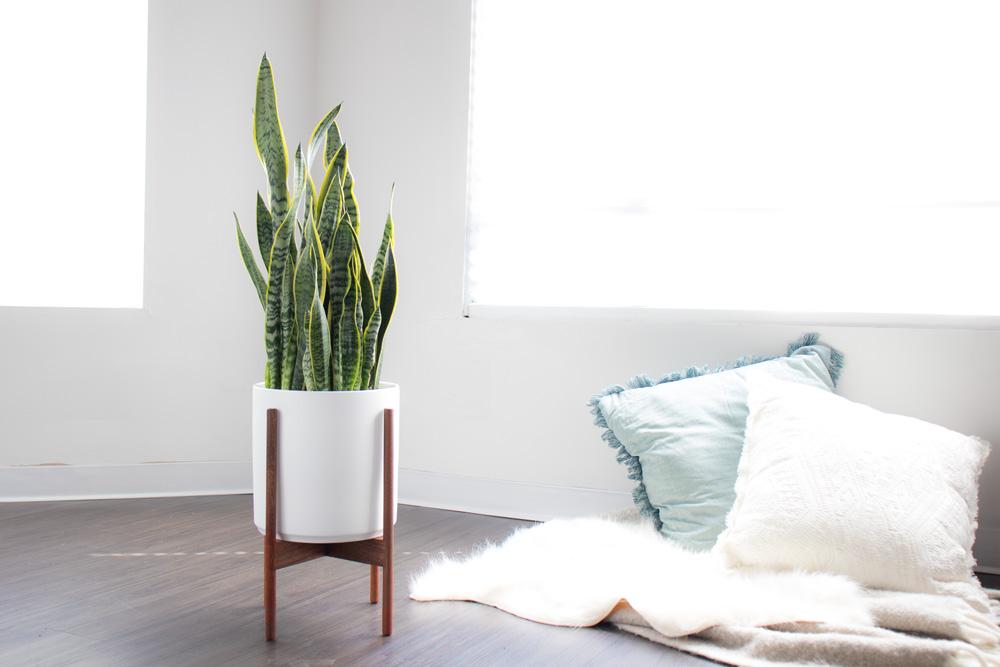 1. Qu'est-ce que la lumière directe - Est-elle conseillée pour mes plantes d'intérieur …