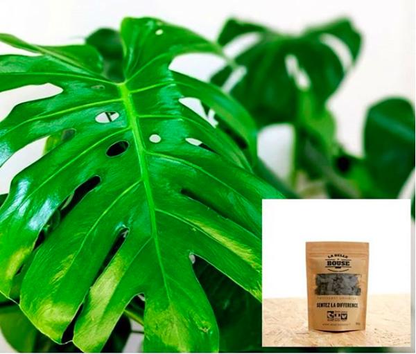2. Fertiliser ses plantes vertes ? - Quand et comment ?