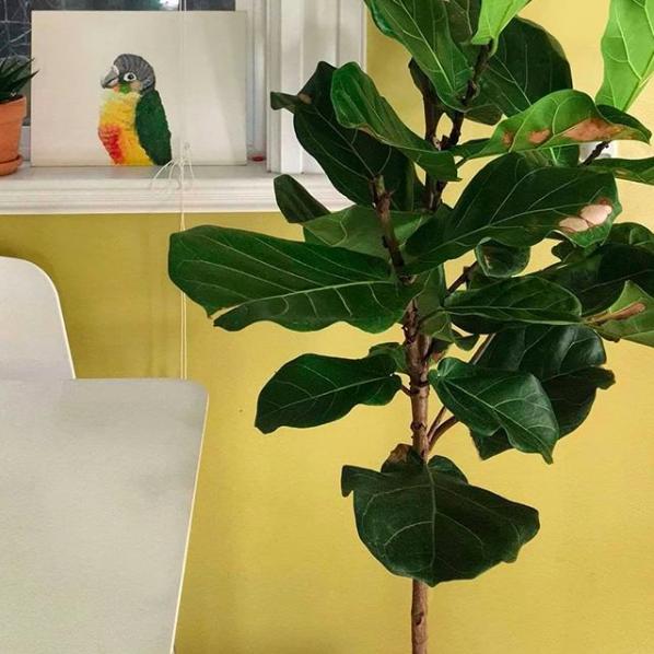 Ma plante verte a des tâches brunes sur ses feuilles … - Est-ce grave ?